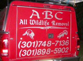A B C ALL WILDLIFE REMOVAL